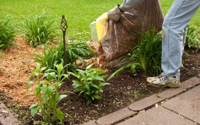 5 Tips to Improve Your Landscaping